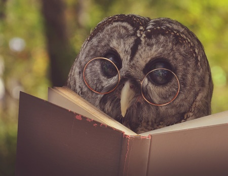 33924982 - an owl animal with glasses is reading a book in the woods for an eduication or school concept.